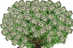 A tree is covered with dollar bills